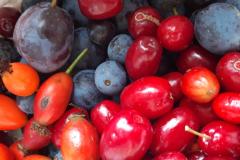 Früchte4